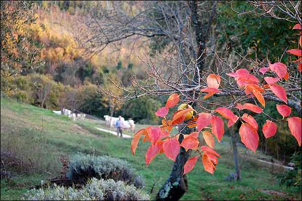Naturen omkring Assisi Retreat Center