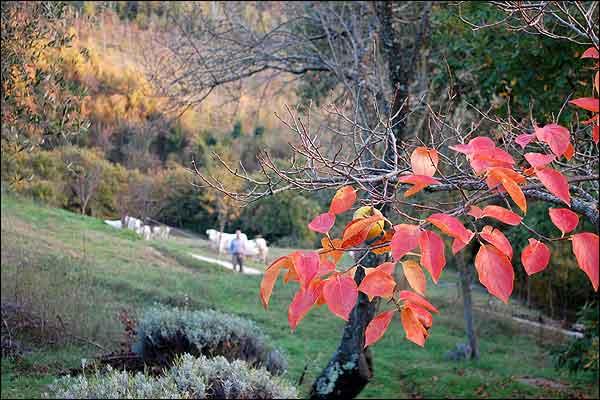Nature around Silent Retreat Center